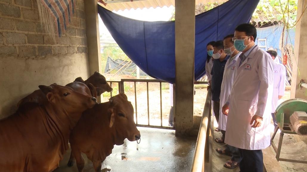 Nghiêm cấm việc người dân bán chạy trâu, bò mắc bệnh