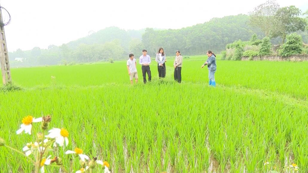 Xây dựng chuỗi liên kết sản xuất lúa gạo ngay tại địa phương