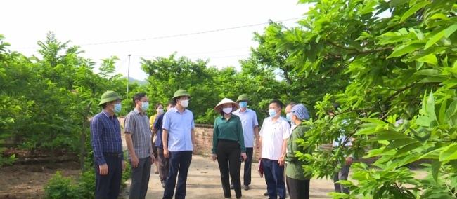 Phát triển nông nghiệp, nông thôn gắn với du lịch cộng đồng
